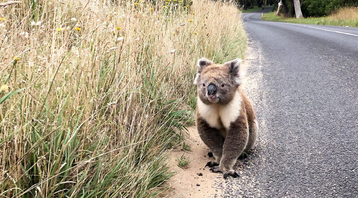 Unispace supports bushfire affected communities and injured wildlife with donations